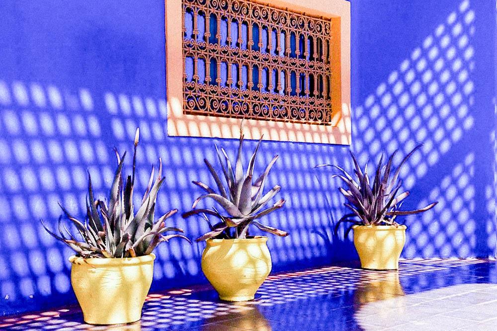 Jardin majorelle Sylvia Calmet vos photographies de famille au Maroc